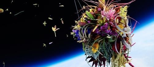 Exobiotanica, fiori nello spazio