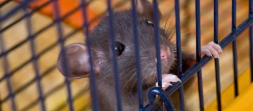 La Corte di Lussemburgo dice NO ai cosmetici testati sugli animali