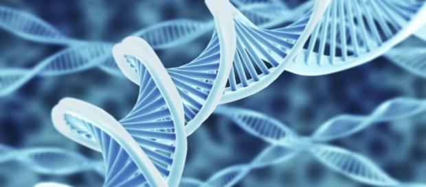 Hallan un nuevo mecanismo de reparación del ADN