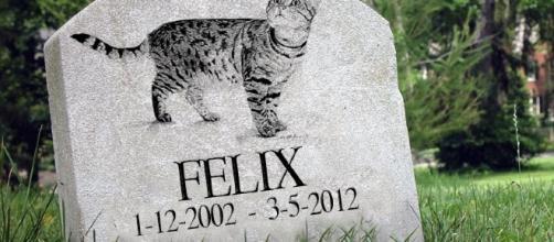 In vendita la borsa rivestita da un gatto morto.