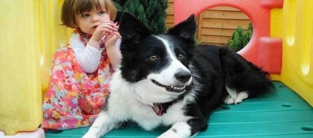 Cão de salva a vida de uma criança de três anos, veja