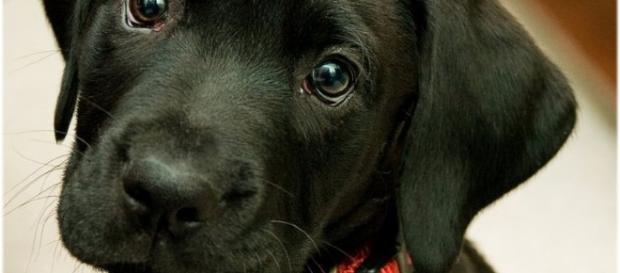 Os cachorros demonstram seu amor de várias maneiras.