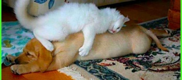 Gatos e cachorros também podem se dar muito bem.