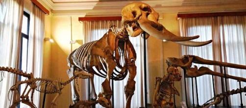 Museo civico di Zoologia, Roma
