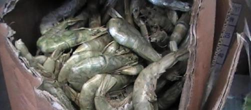 600 chilogrammi di pesce scaduto