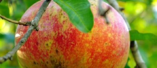Benefici del frutto di melograno.