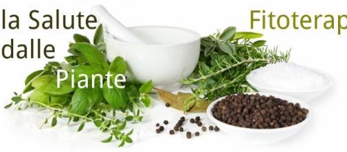 Fitoterapia: rimedi naturali per diabete e colesterolo