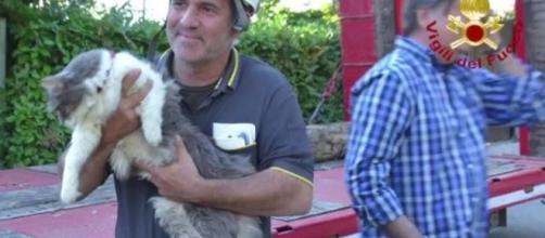 Rocco, il micio salvato dopo 32 giorni tra le macerie