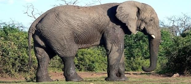 Le Brésil ouvrira le premier sanctuaire pour les éléphants