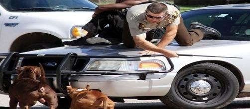 Homens se protegem e sobem no capô de um carro
