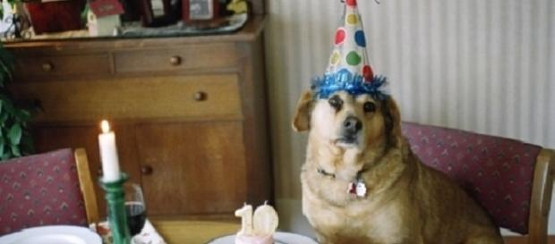 5 coisas com as quais os cães precisam estar sempre em contato