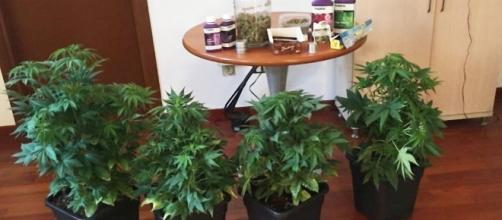 I Carabinieri hanno recuperato sei piante di marijuana e oltre un chilo di foglie e inflorescenze.