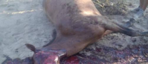 Il corpo senza vita del povero animale è stato ritrovato per caso da un passante.