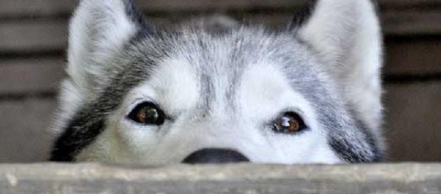 Capacidade de percepção desses animais é incrível