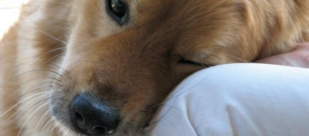 6 vezes que o seu cão demonstrou o amor dele por você