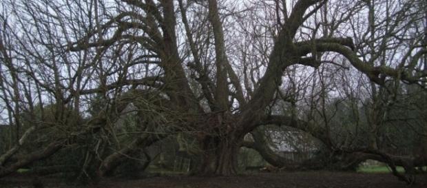 histoires d'arbres - canalblog.com