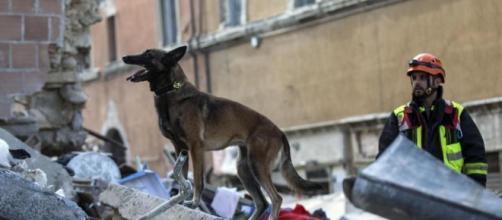 10 cani eroi del terremoto (FOTO)   Tutto Zampe - tuttozampe.com