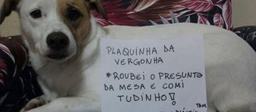 Cachorros com plaquinha da vergonha