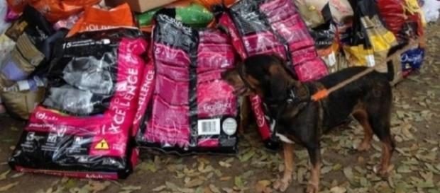 SUIPA precisa das doações para alimentar os cães (Foto: Maurício Ferro/ O Globo)