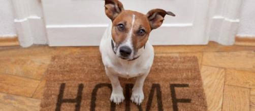 Animali domestici e condominio, ordinanza n.7170/2014