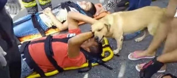 Cachorro tenta ajudar o dono - Foto/Reprodução