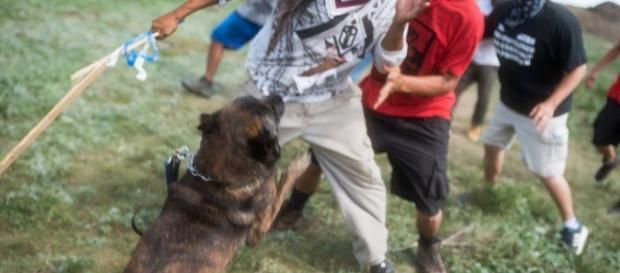 Native Americans attacked by vicious dogs of Dakota Access ... - narconews.com