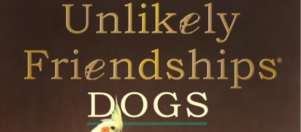 "The cover of the newest book in the series, ""Unlikely Friendships Dogs."" / Photo via Luiz Higa Junior, Caters News Agency Ltd. Used with permission."