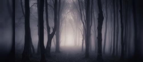 O misterioso vale de Heizhugou ou Vale do Bambu Negro na China