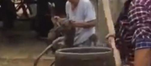 Cachorro morre após ser jogado em água fervendo.