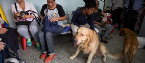 Diariamente centenares de mascotas son olvidadas por sus dueños