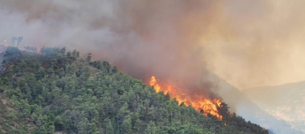 Los incendios forestales están arrasando el país