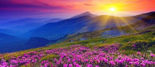 Paz é sinônimo de harmonia, acolhimento, amor