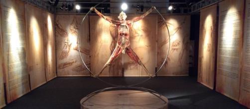 La prima sala della mostra Real Bodies a Milano