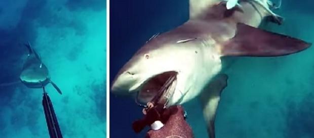 Homem é atacado por tubarão durante mergulho na Austrália.