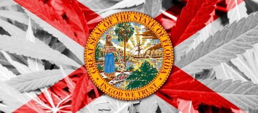 Analysis of Florida's Amendment 2 Medicinal Cannabis Law   Canna ... - cannamagazine.com