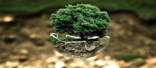 El respeto del medio ambiente es esencial para salvar el planeta. Public Domain.