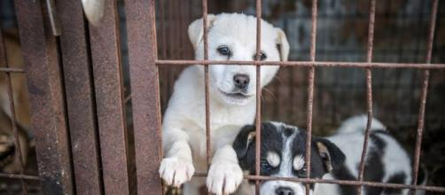 Two hundred dogs that were destined to being butchered for South Korea's dog meat industry have been rescued.-- Humane Society International
