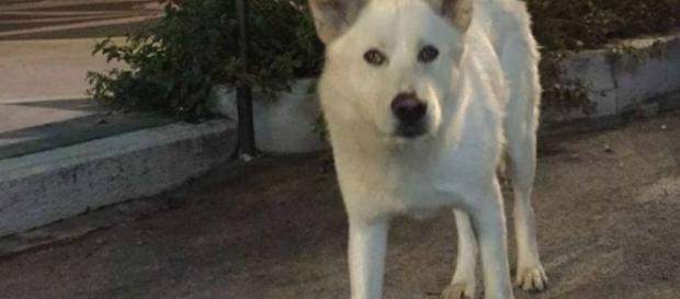 Il cane Angelo, ucciso a Sangineto tanto per ridere, avrà finalmente giustizia