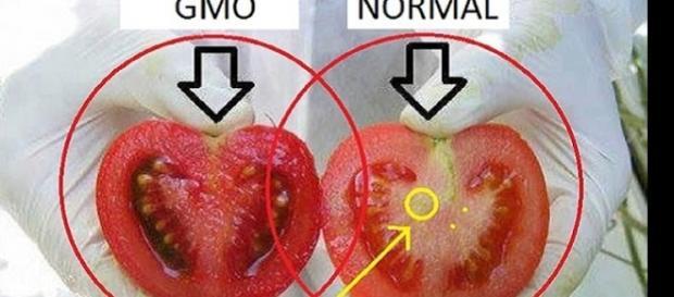Imagem de um tomate produzido genticamente contra outro produzido naturalmente.