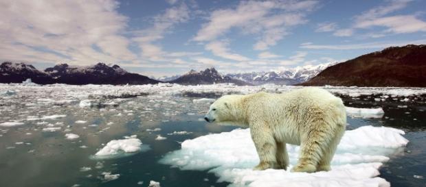 Mira cómo el hielo del Ártico se ha derretido