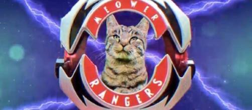 Meower Rangers ready for action! Photo via news.tokunation.com.