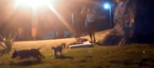 O momento do ataque. Imagem reproduzida a partir do vídeo.