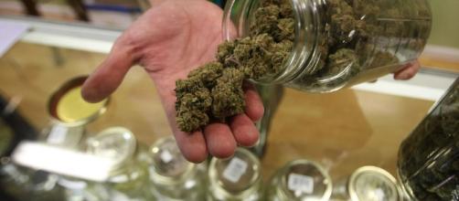 When A Lie Travels: Comparing Alcohol To Marijuana — CALM USA - calmusa.org