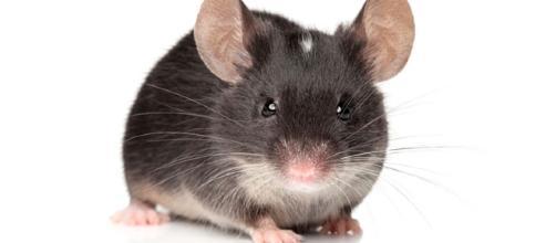 Mice were able to regain the ability to sense light. - com.au