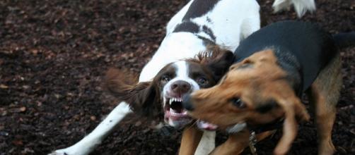 Las fiestas de San Antón ayudan a concienciar sobre el abandono animal