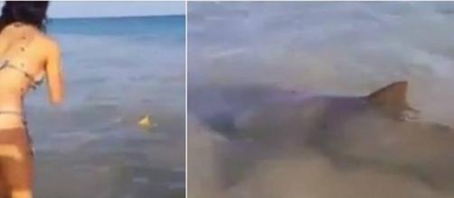Tubarões e arraias são filmados em Fernando de Noronha