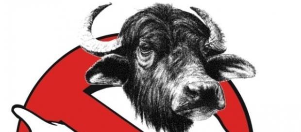 Beppe Grillo lancia il sondaggio 'Bufalino d'oro' per smascherare le bufale contro il M5S
