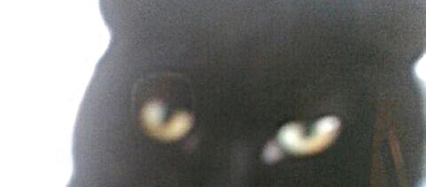 UK, gatto calpestato e scaraventato in un cespuglio da un uomo