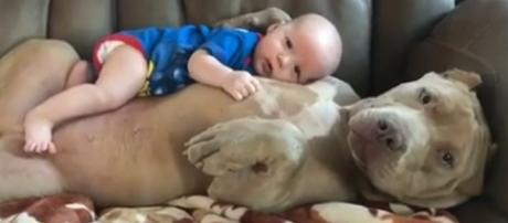Esse é o bebê protegido por seu fiel amigo.