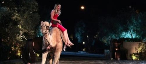 Lacy arrives at the Bachelor mansion on a camel — ABC Television Network